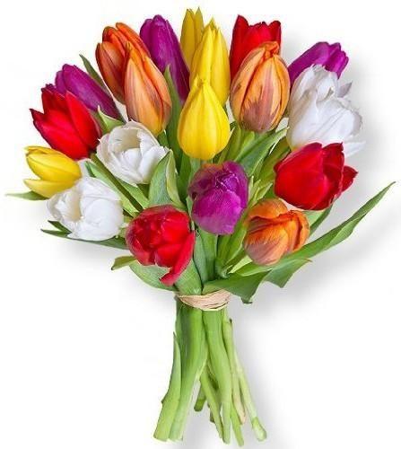 Pisani tulipani