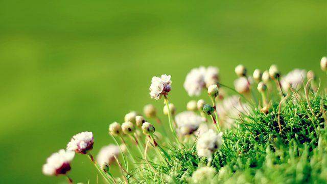 Cvetje ob slovesu